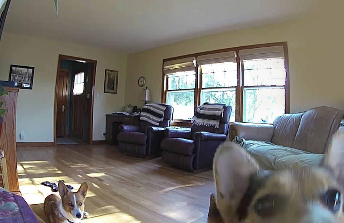 Video of puppies at home